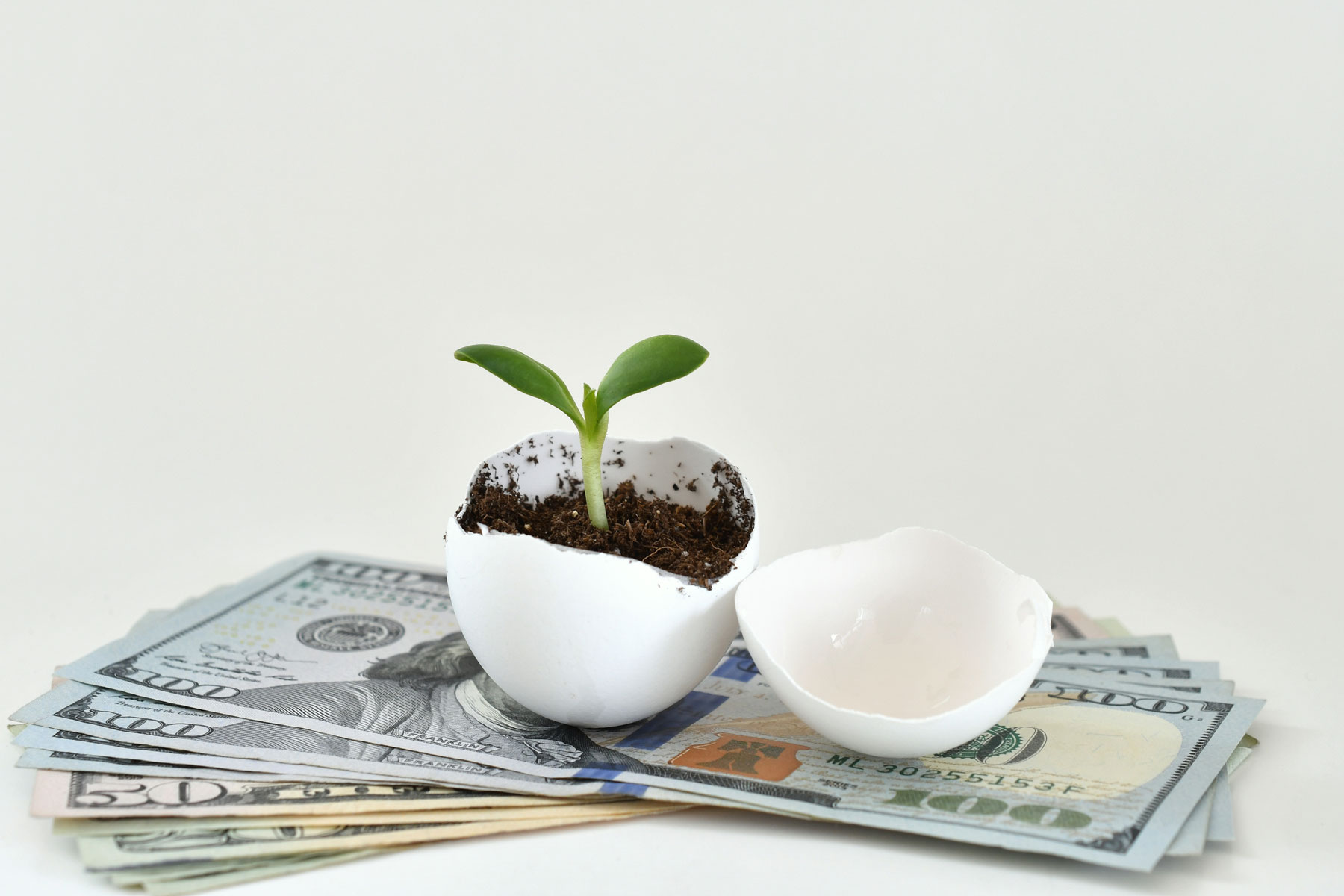 a green plant sitting on top of a pile of money